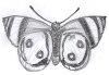 Schmetterling_ebook